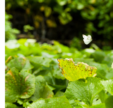 生物多様性を育む農法